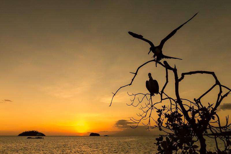 Elizabeth Bay, Isabela Island, Galápagos. Silhouetted frigate bird and pelican.