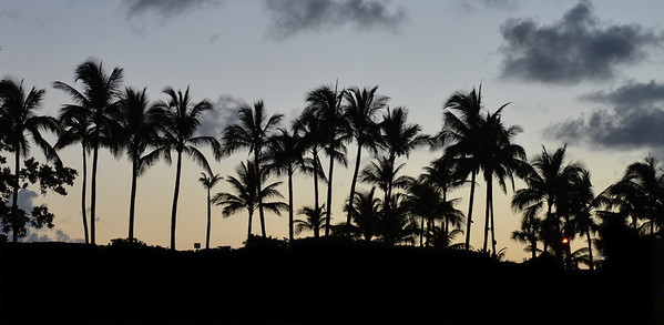 Palms at Dawn