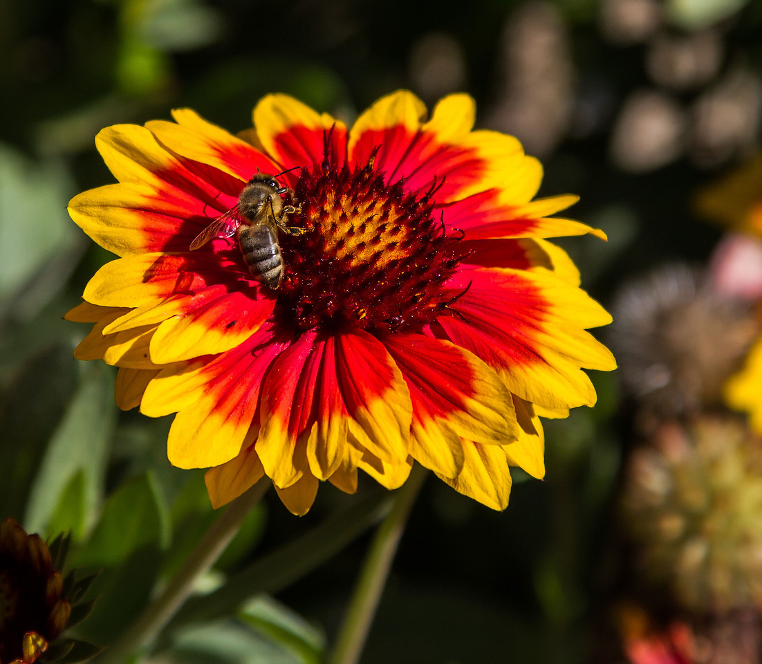 IMAGE: https://photos.smugmug.com/Other-Galleries/Bugs-Butterflies-Spiders-etc/i-q3WWXHx/0/X2/IMG_2995-X2.jpg