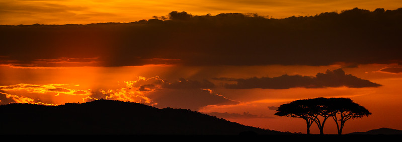 Serengeti, Tanzania. Acacia trees are silhouetted by the sunset.