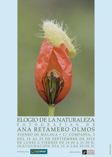 """<a href=""""http://issuu.com/anaretamero/docs/ana_reramero_catalogo_?mode=window&backgroundColor=%23222222"""">Catálogo completo de la exposición  <a href=""""http://la-mirilla.diariosur.es/espia-de-la-naturaleza-20100913115.html"""">Enlace a """"La mirilla"""". Diario Sur</a>  <a href=""""http://www.ateneomalaga.es/default.asp"""">Enlace a la página web del Ateneo de Málaga</a>"""