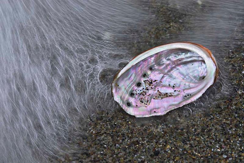 """<span style=""""color:#FBEC5D"""">Arrastrada por las olas</span></em>  En el mismo límite del rompeolas, en una playa de oscuras arenas de la costa malagueña, una concha de <em>Haliotis</span></em> (oreja de mar) ha sido recién arrastrada y depositada por una ola que retrocede. Sus atractivas curvas nacaradas contienen aún algunos granos de arena y agua marina que terminarán por escapar por sus características perforaciones. Se trata de un instante de un atardecer avanzado, aislado por la cámara mientras paseaba por la orilla de una de nuestras playas. El efecto de paso del tiempo ha sido reforzado por la elección de una velocidad de disparo relativamente lenta que desvela las lineas de flujo en el retroceso del agua.  Nikon D200, Nikkor 105 mm f2.8, f/25, 1/10, ISO 100"""