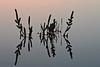 """<span style=""""color:#FBEC5D"""">Amanecer en la marisma</span></em>  Extrayendo poco a poco a las sapinas <em>(Sarcocornia perennis)</span></em> de la sombra y revelándolas sobre un espejo de plata, las primeras y tenues luces del día parecen anunciar el comienzo de un día calmado.  Busqué mostrar una perfecta simetría en una toma en la que la única nota de color la aporta la luz anaranjada de los primeros rayos de sol."""
