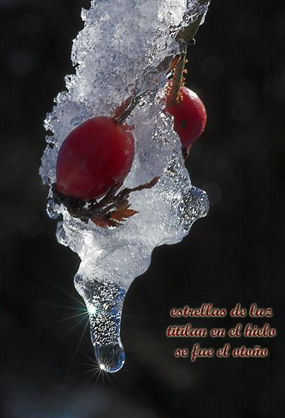 Haiku de la llegada del invierno (Ana Retamero Olmos)