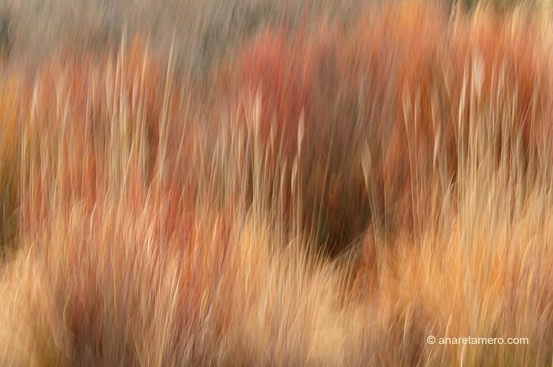 Vegetación de rivera