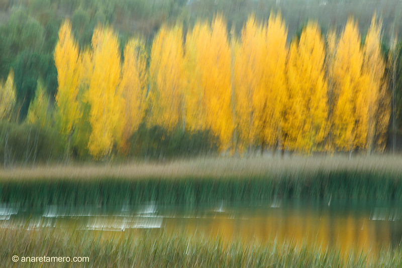 Fochas en otoño (pantaneta de Alhama de Granada)