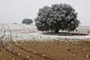 Nevando en Los Llanos