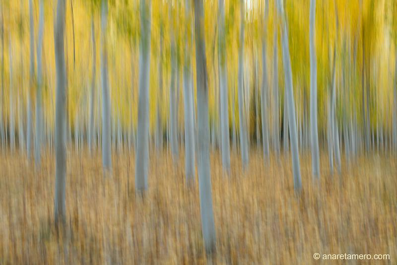 Pinceladas de otoño (Alameda de Játar)