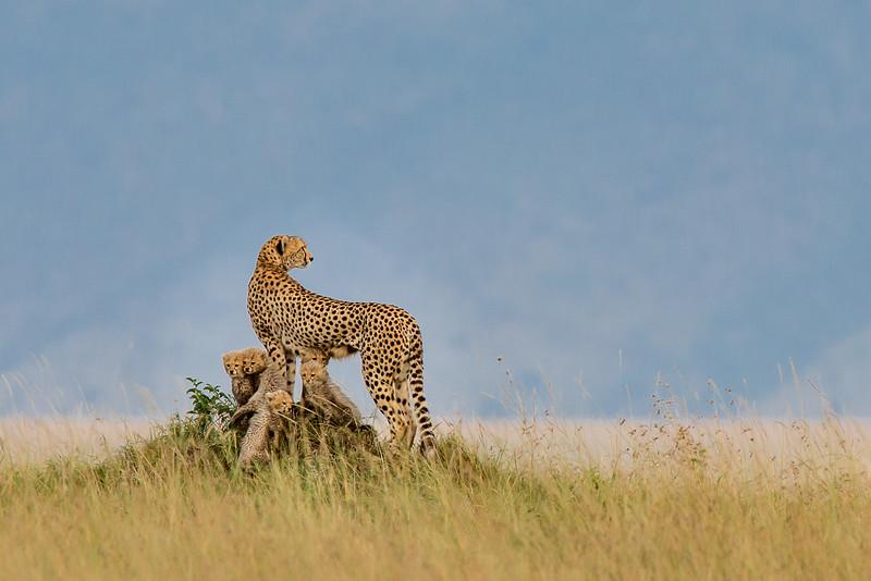 Masai Mara National Reserve, Kenya.