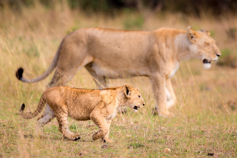 Masai Mara National Reserve, Kenya