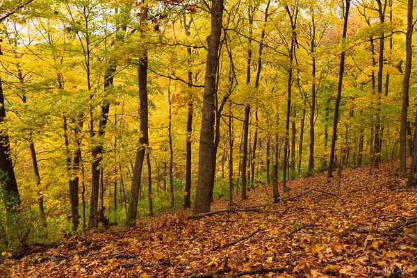 Off The Trail  _D858367-Edit-2-Edit