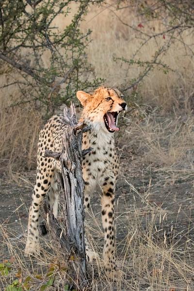 Mashatu Game Reserve, Botswana.