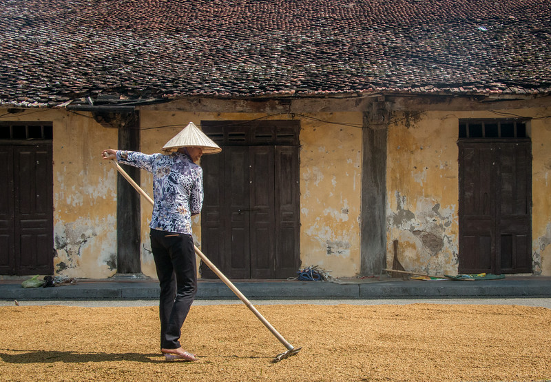 Tam Coc, Ninh Binh, Vietnam: after it is harvested and threshed, the rice must be dried.  Every available flat surface in the village is pressed into service for that purpose.