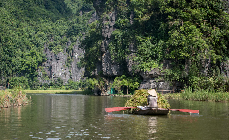 Tam Coc, Ninh Binh, Vietnam: Tam Coc is harvesting rice when the northern mountain fields have just been planted.