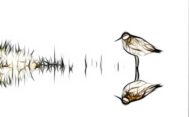 High key shorebird