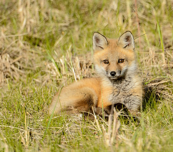 resting in the grass
