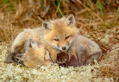 Cozy twins