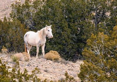Grey foal
