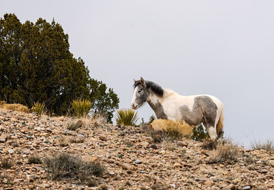 Foal on hillsaide