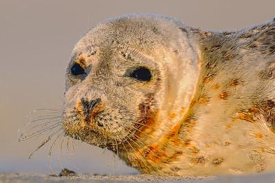 Seals on Beach