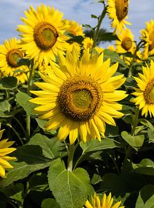 Blooming in Newbury