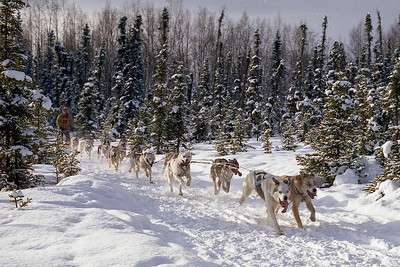 Alaska Sled Dog Race