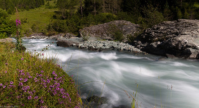 Mountain creek with thyme and fireweed, Austrian Alps
