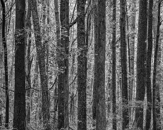 Woodland Textures
