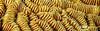 Maze Coral  - Closeup