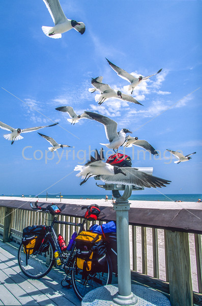 Seagulls inspecting bike helmet at beach at Gulf Shores, Alabama - 1-Edit - 72 ppi