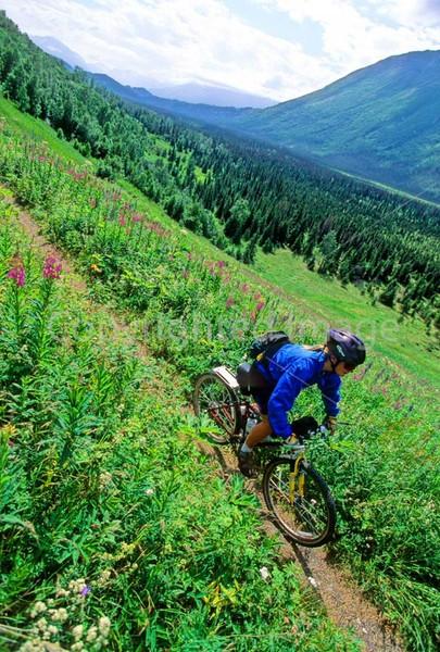 Mountain biker(s) in Chugach Mountains on Alaska's Kenai peninsula  - B ak chugach 37 - 72 dpi 2