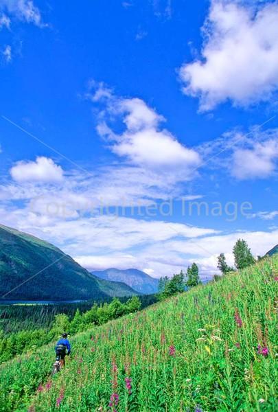 Mountain biker(s) in Chugach Mountains on Alaska's Kenai peninsula  - B ak chugach 102 - 72 dpi - 2