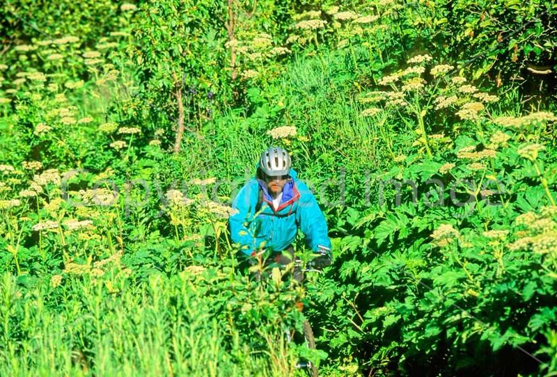 Mountain biker(s) in Chugach Mountains on Alaska's Kenai peninsula  - B ak chugach 21 - 72 dpi 2