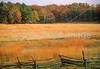 Chancellorsville Battlefield, near where Stonewall Jackson fell - 72 dpi-1
