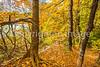 Katy Trail near Rocheport, MO - C1-0447 - 72 ppi