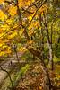 Katy Trail near Rocheport, MO - C1-0473 - 72 ppi