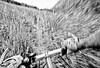 Alaska single-track in Chugach Mountains - 72 ppi
