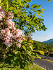 Blue Ridge Bliss-Skyline Drive - D7-C2-0012 - 72 ppi