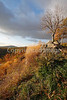 View along northern portion of Skyline Drive in Shenandoah National Park, Virginia- - 72 dpi