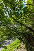 Blue Ridge Bliss-Skyline Drive - D6-C2-0124 - 72 ppi