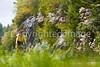 Blue Ridge - rhododendron - 72 dpi - -0068