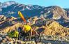 Death Valley National Park - D1-C1-1033 - 72 ppi-2