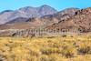 Death Valley National Park - D4-C3-0878 - 72 ppi
