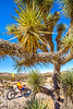Joshua Tree National Park - 2016 -D1- C2-0062 - 72 ppi