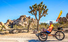 Joshua Tree National Park - 2016 -D1- C3-0075 - 72 ppi