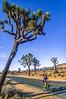 Mountain biker at Joshua Tree National Park in California - 9-2 - 72 ppi