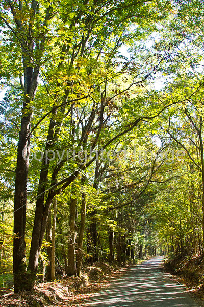 Russum-Westside Road on Grant's path to Port Gibson, MS  - D6 - C3-0026 - 72 ppi