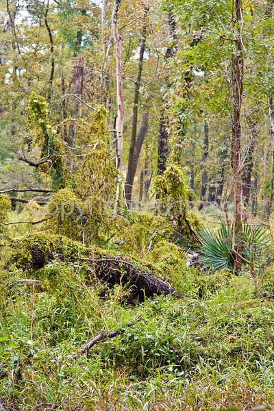 View from dirt road approach to Yucatan Lake  along Grant's March route in Louisiana - D4-C3-0063 - 72 ppi