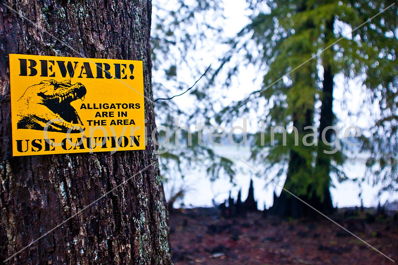 Winter Quarters site on Lake Saint Joseph in Louisiana - D4-C2-0003 - 72 ppi