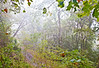 Road to Fort Cobun near Grand Gulf Military Park, Mississippi - D5 - C2-0047 - 72 ppi-2